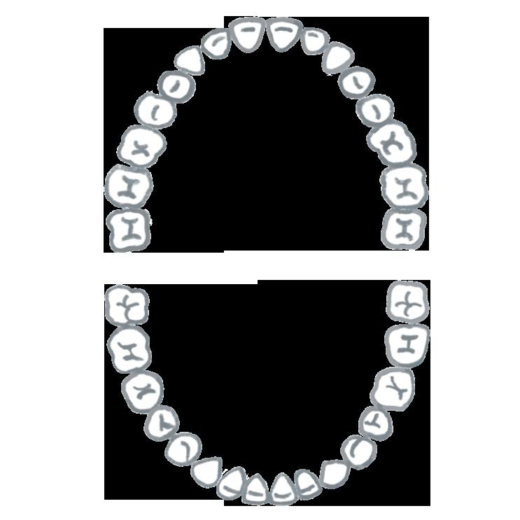 歯並び(大人)のイラスト画像