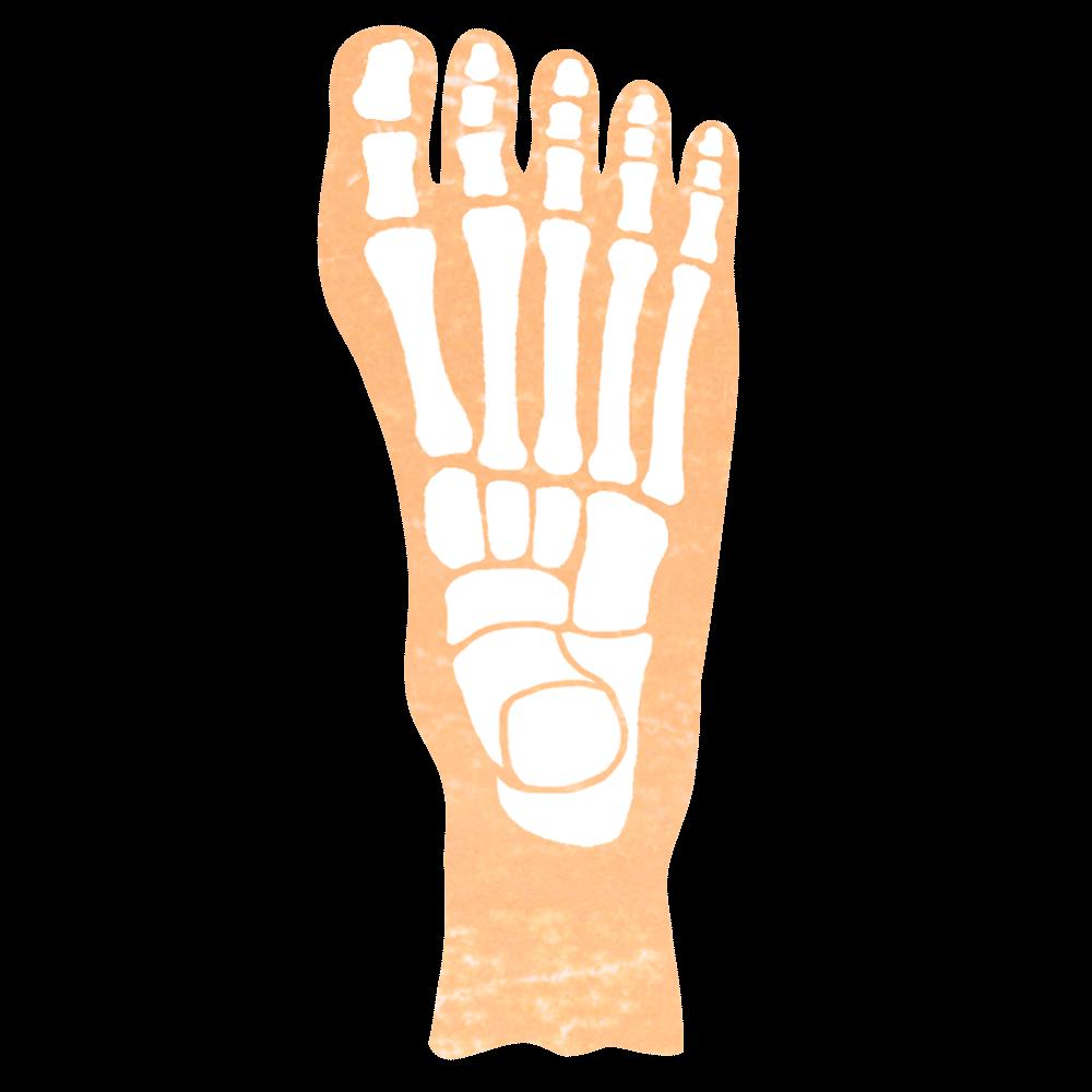 足の骨の無料イラスト画像