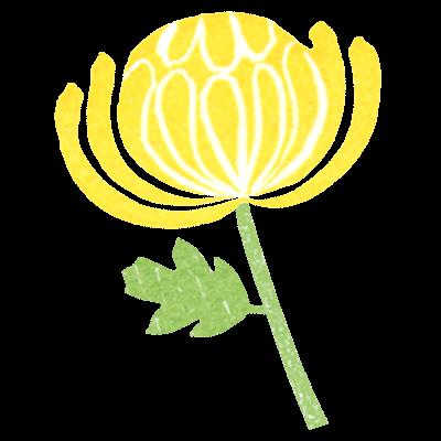 黄色い菊の花イラスト