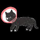 エリザベスカラーを付けた黒猫のイラスト画像