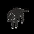 すり寄ってくる黒猫のイラスト画像